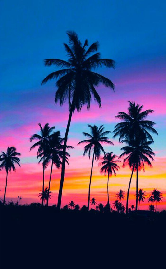 einmalige - bilder von palmen - bunter hintergrund