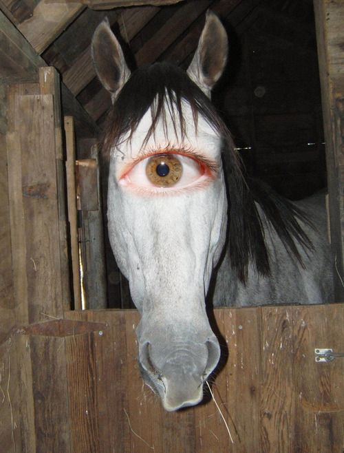 BIZAR HORSE  People Stuff nFun  Scary animals Animals