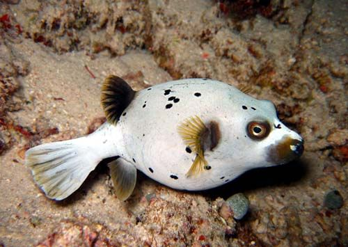 8 best water dog pics images on pinterest fish nature for Water dogs fish