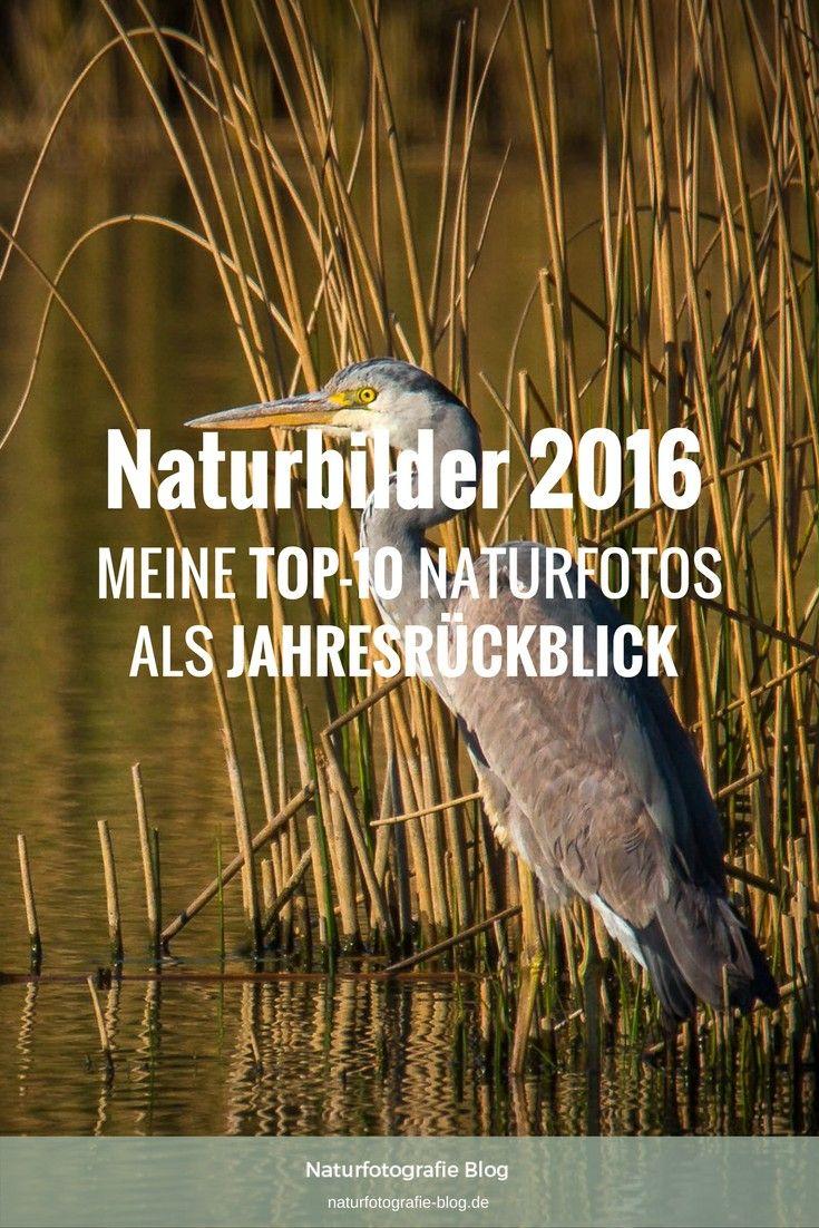 Hier stelle ich Dir meine zehn besten Naturbilder 2016 vor. Im Stile einer Top-10 zeige ich Dir so meine persönlichen Jahresrückblick. Klick hier!  #Naturbilder #Naturfotos #Top10 #Top-10 #2016 #Naturfotografie #Highlights