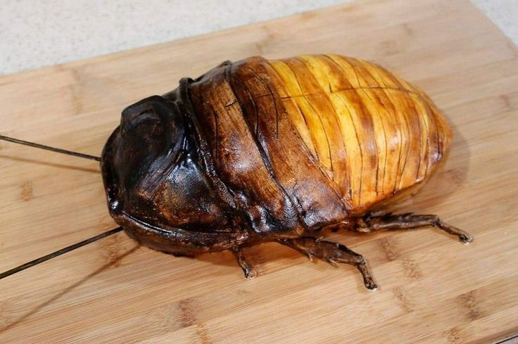 Madagascar Hissing Cockroach Cake ~ Laughing Squid