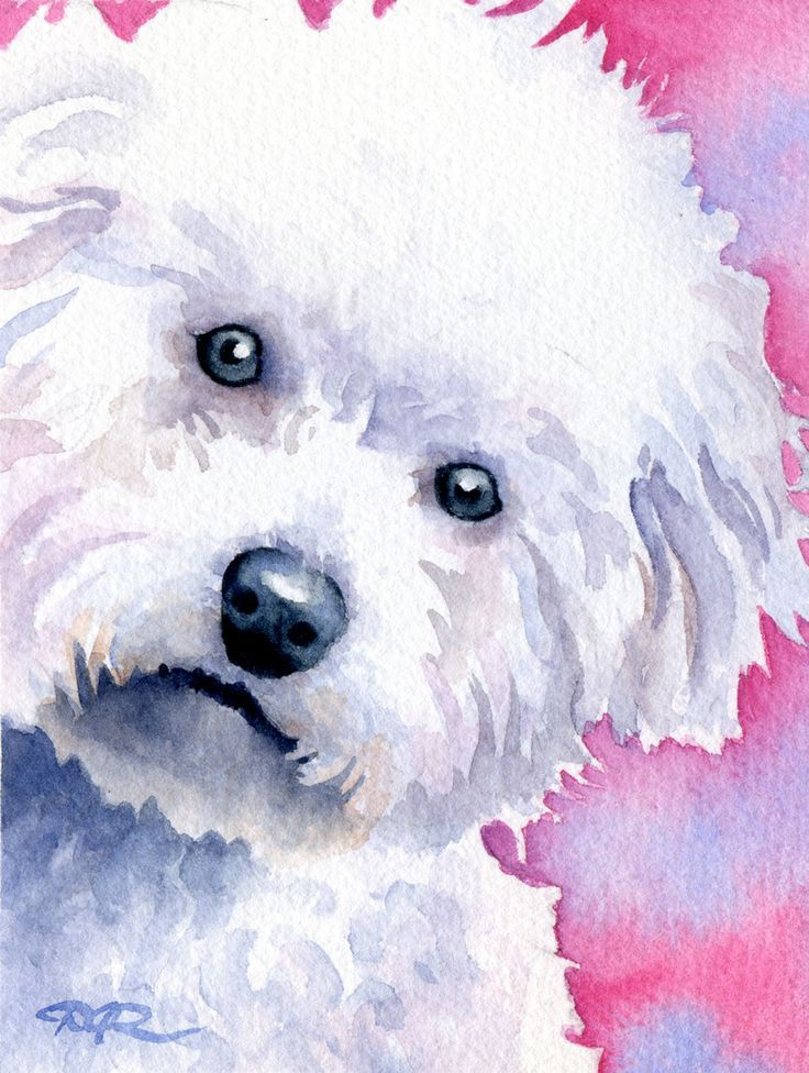 BICHON FRISE Dog Watercolor Art Print Signed by Artist DJ ...