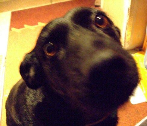 Kérlelő kutyaszemek, ezeknek lehetetlen ellenállni. És ők ezt tudják!