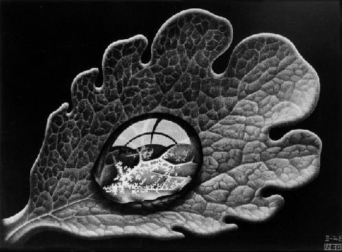 """M.C. Escher """"Dewdrop"""" 1948.   The artwork approaches photo-realism. It is eye-catching. It seems simple, but the details are extremely intricate."""
