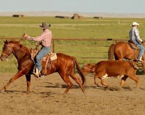 Money's Doc Peppy for Sale - For more information click on the image or see ad # 70475 on www.RanchWorldAds.com