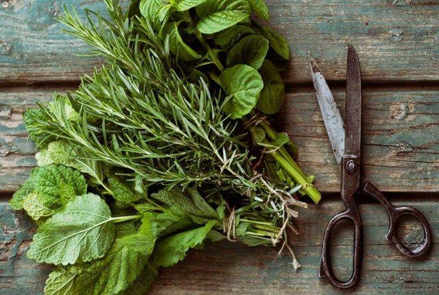 Fresh herb plant gardens,herb garden container,Herb Garden Designs,Water Herb Plants