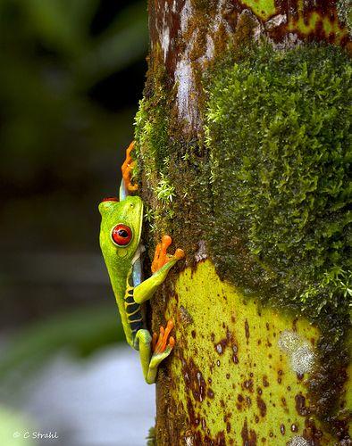 Tortuguero  National Park - Costa Rica