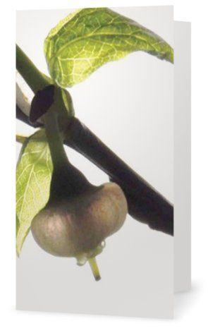 Blueberry flower. Cards for florists. Gift card for flower arrangements. Scandinavian design. Jäderberg & Co.