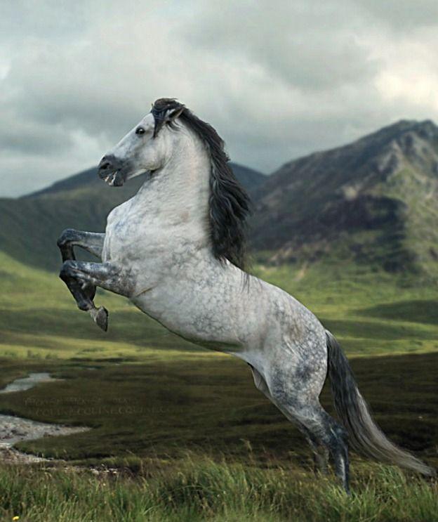 Awesome rearing leaping horse! Pura Raza Española, Escudero VII, a popular exhibition performer. photo: Katarzynz Okrzesik.