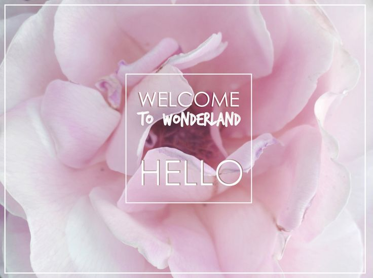 HELLO! Welcome to WONDERLAND.
