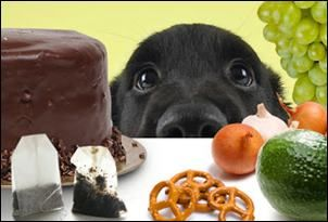 8 Dangerous Foods For Dogs That Should Never Give To Your Pet