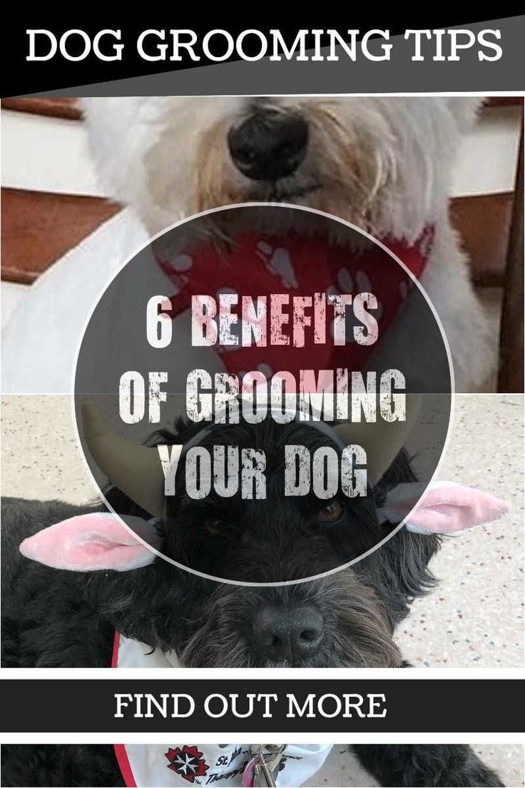 Mejores 12637 imgenes de dog grooming en pinterest salones de matted hair a dog grooming nightmare you can find more details by visiting solutioingenieria Images