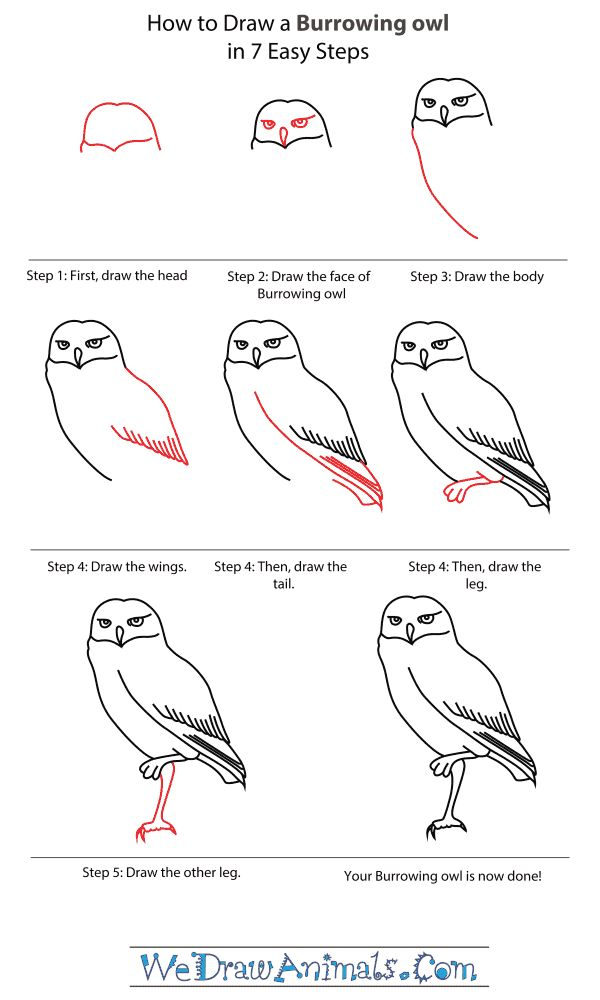 1000 images about how to draw an owl on pinterest draw