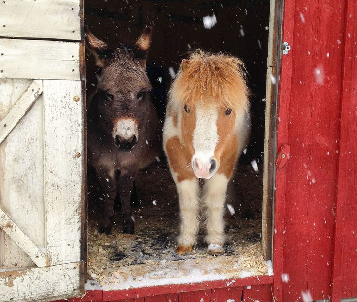 She now spends her days raising baby animals on her backyard farm. How cute are these mini horses?!