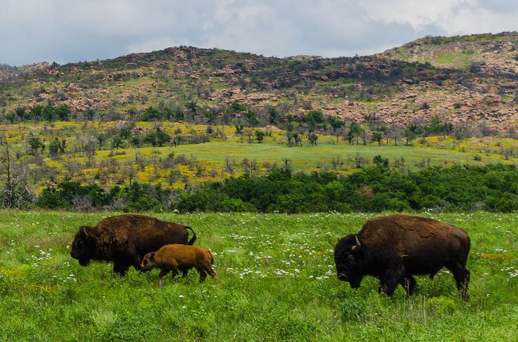 Spring in the Wichita Mountains Wildlife Refuge in Southeast Oklahoma