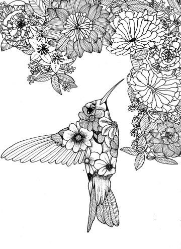 Humming Birds Adult Coloring Books Colouring Secret Gardens Insects Art Ideas Stress Butterflies