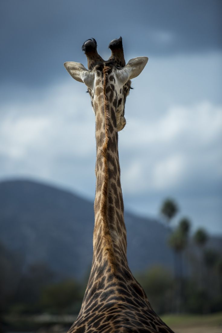 "el-mo-fo-to: "" m o s a i c   escondido, california © Lorenzo Montezemolo [ ig   tumblr   flickr   web ] """