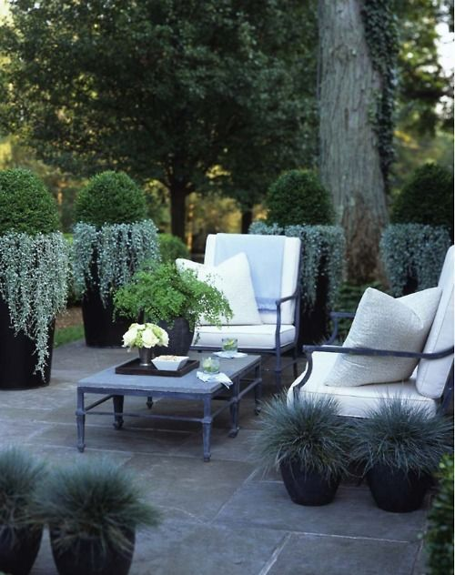 Tall planters for privacy on a patio. Looks like trailing dusty miller hanging from the tall pots and 'Elijah Blue' grass in the low pots.