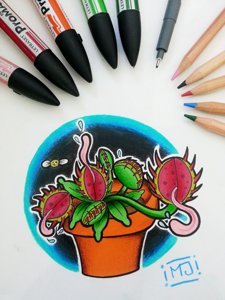 #piantacarnivora #piante #cartoon #sketch #sketchcartoon #flash #drawing #illustrationi #disegni #arte #flashtattoo #illustrationitattuaggi #tattoo #tatuaggi #mrjacktattoo #pantoni