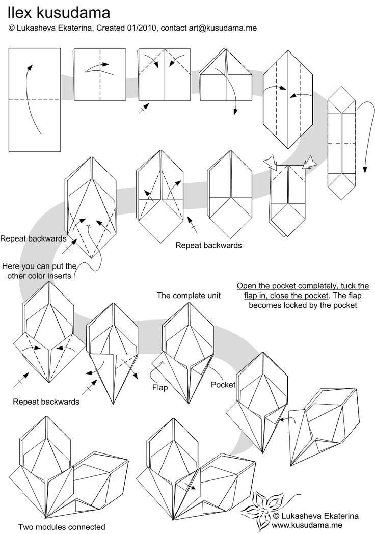 diagram for ilex kusudama