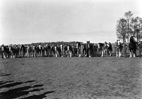 Horses at a sale on 'Black Heath' Station, 1932