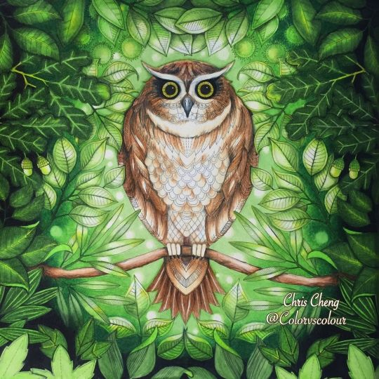 One Of The Best Owls I Have Seen From Secret Garden Coloring Book