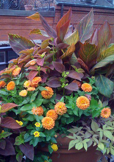Orange/Yellow/Maroon color scheme.  Container planting with Canna, Coleus, Zinnia, Lantana & Ipomoea
