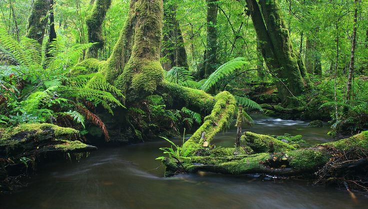 So green! Mossy rainforest at Marysville, Victoria. Walk  these trails in the Visit Marysville app. www.marysvilletourism.com/visit-marysville-app