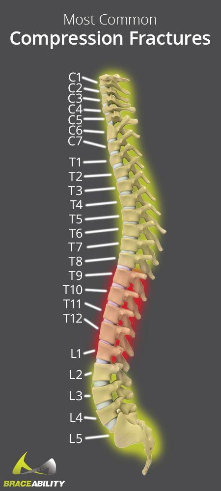 Best 25 Thoracic Vertebrae Ideas On Pinterest Surgery