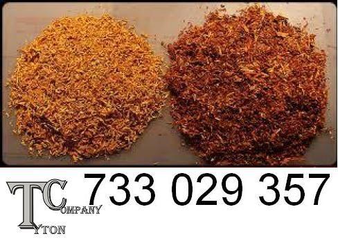 Tyton, Tytoń, Tani i smaczny, 79 zł/1kg Tanio