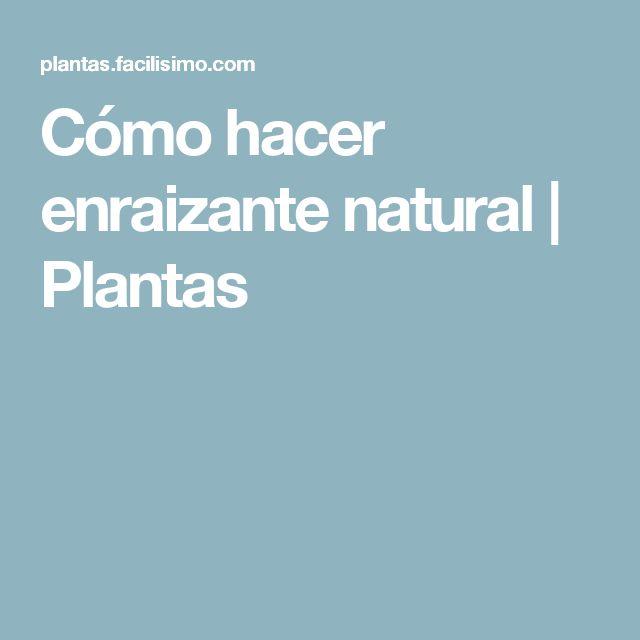 Cómo hacer enraizante natural   Plantas