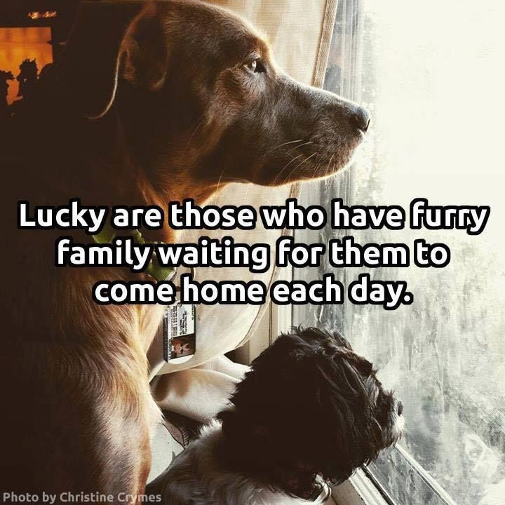 Lucky are those who have furry family waiting for them to come home each day. #doglove #mansbestfriend