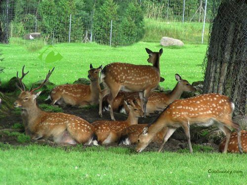 #Odisha #Wildlife Tour. #Odisha is the perfect spot to get drenched in the nature's endowments. Wildlife, lush green forests and zoological parks are scattered throughout the state. Wild life in Odisha is an integral part of its tourism. The#Simlipal National Park