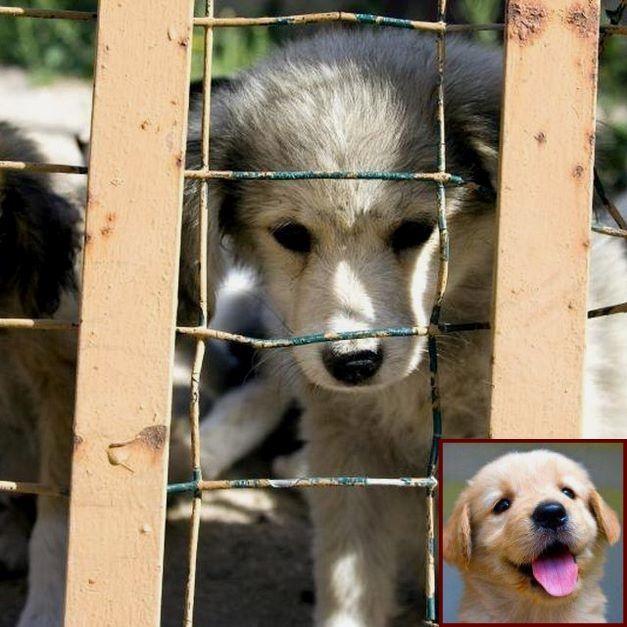 Dog Behavior Expert Near Me And Dog Behavior Flea Biting Dog