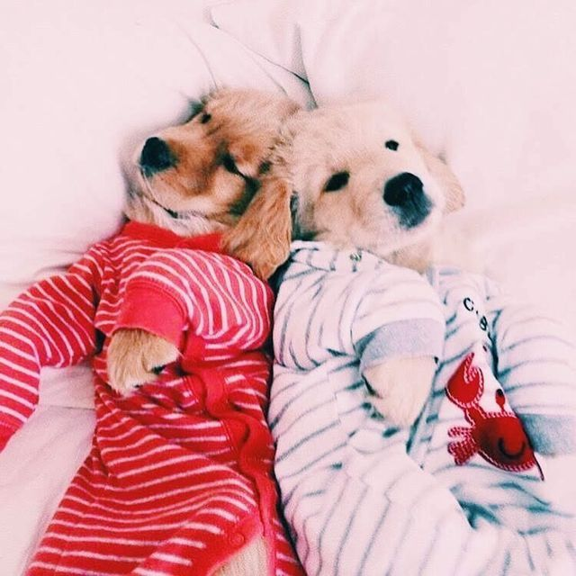 Positiveevibes Cute Baby Animals Cute Animals Cute Dogs