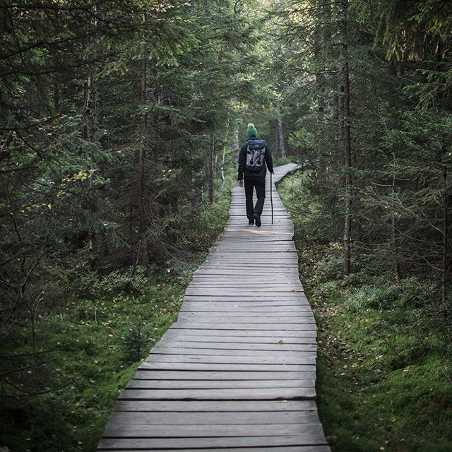 🌲Skřítek🌲#rejviz #vlese #autumn #beautifulnature #fiftyshades_of_nature #pickmotion #moody_nature #octoberpassages