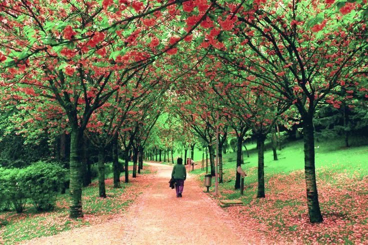 Walking in the Park - Dikmen Valley - Ankara / Turkey