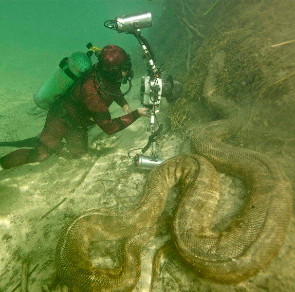 Giant anaconda in the Amazon river. Wow.