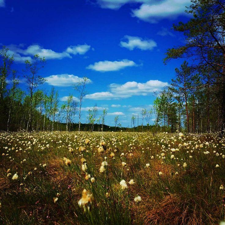#pyhtää #valkmusanationalpark #valkmusa #finland #kaakko135 #finland #finnishnature #suo #swamp #wetland