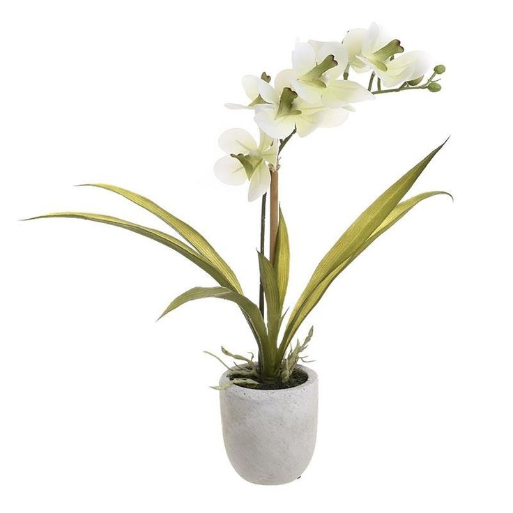 Synthetic Flower - Flowers - Plants - DECORATIONS - inart