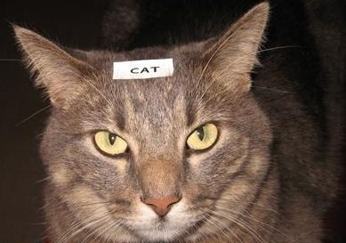 If I had a cat....Brother P-Touch Labelling Tapes available at www.sprint-ink.co.uk   Perfect for stating the obvoius