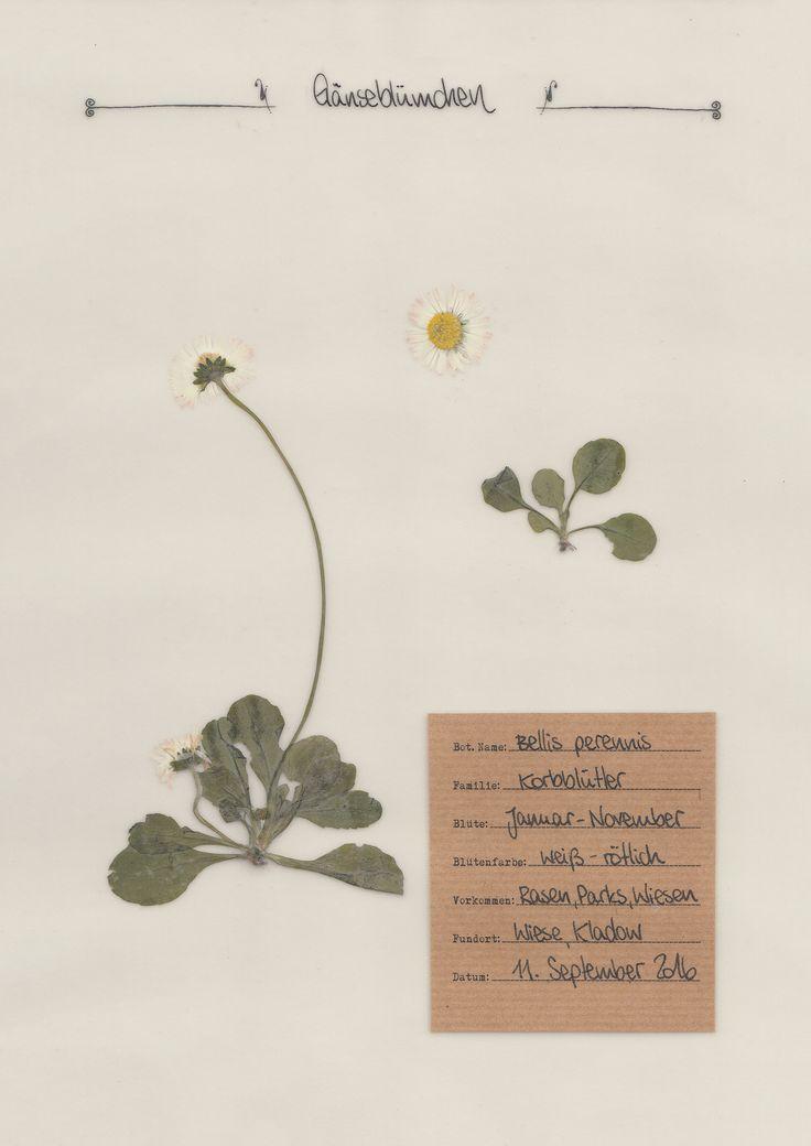 16 besten herbarium bilder auf pinterest blumen pflanzen dekorpapier und kr uterkasten. Black Bedroom Furniture Sets. Home Design Ideas