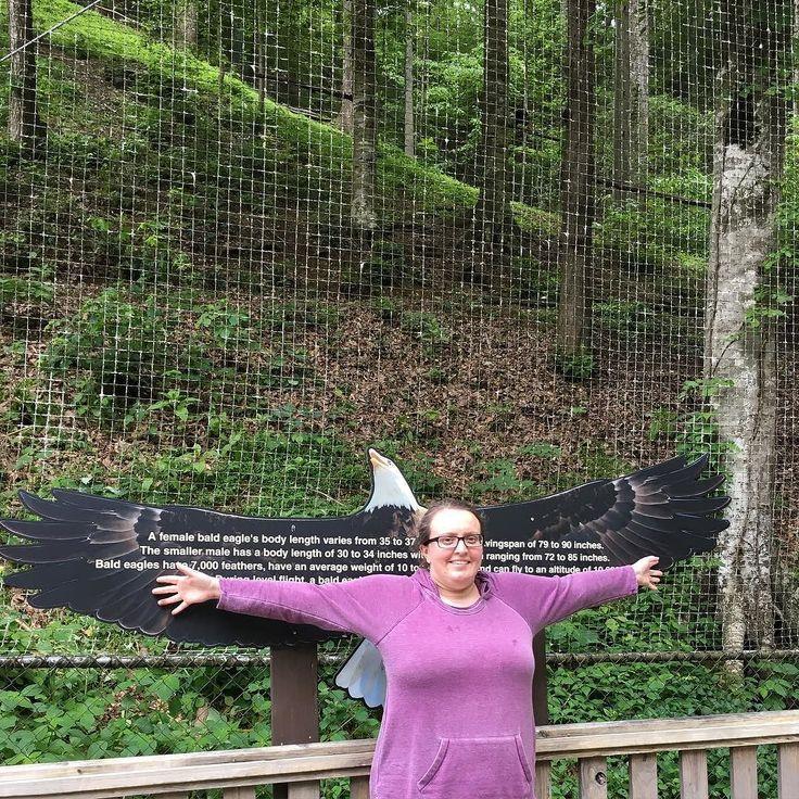 A female bald eagle has a larger wingspan than I do!  #oh2tn16 #travelblog #dollywood #amusementpark #tennessee #womanlywoman
