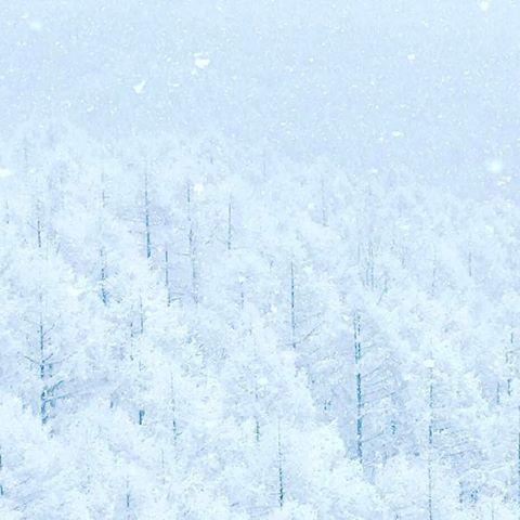 【salt_dai】さんのInstagramをピンしています。 《#iphone7 #iphone7plus #山 #森 #カラマツ #雪 #雪景色 #雪国 #雪山 #長野県 #黒姫高原 #写真部 #写真 #景色 #風景写真 #日本の風景 #日本 #写真館 #白》