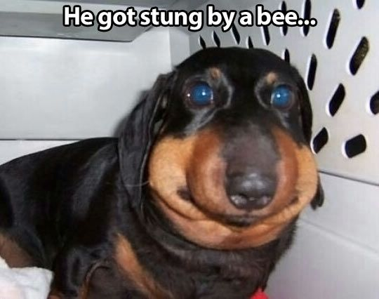 Hahaha I can't stop laughing at this!