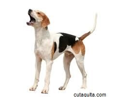 10 -Most -Cheapest-Dog-Breeds-in-the-World