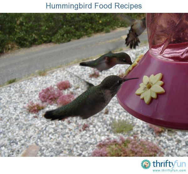 This page contains homemade hummingbird food recipes. Hummingbird food can go bad quickly. So it is important to change it often. Store bought foods can be expensive and contain dyes that are not good for birds.