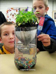 Learn about the layers of an ecosystem using a pop bottle!