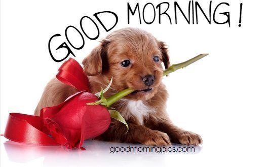 Best Dog Seat Belt >> This message and this rose is for you!   Good Morning   Pinterest   Beautiful red roses, Good ...