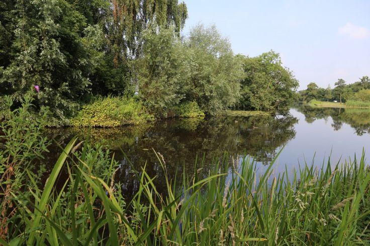 Losloopgebied Donkereindse Bos en Korenmolenweg in Wilnis, ga heerlijk wandelen in losloopgebieden met uw hond!
